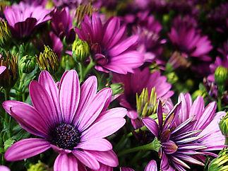 may-flowers.jpg