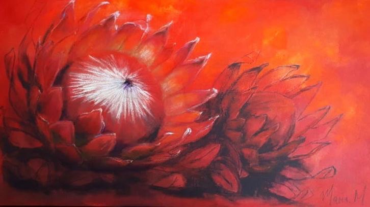 Protea 1