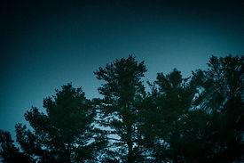 Forêt la nuit
