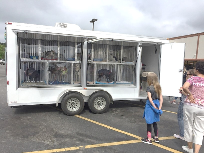 Petsense Adoption Event 05-04-2019