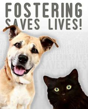 fostering saves lives.jpg