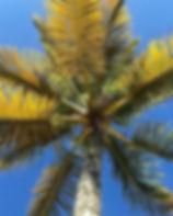 #Bahia.jpg
