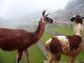 Peru: Machu Picchu - 6 dicas importantes!