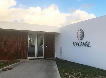 Conhecemos uma das mais modernas Vinícolas de Portugal - Adega Mãe
