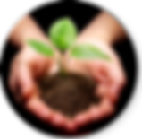 Main plante.png