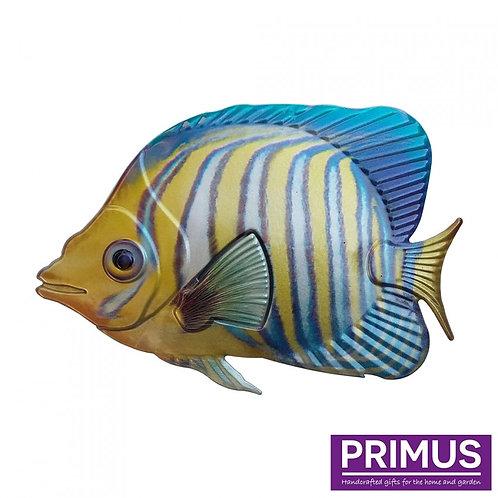 Fish Wall Art - Regal Angelfish
