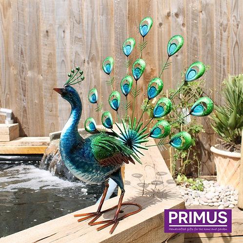 Vibrant Fantail Peacock