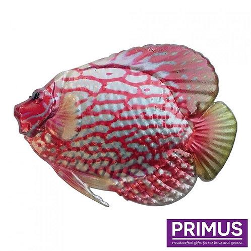 Fish Wall Art - Discus Fish