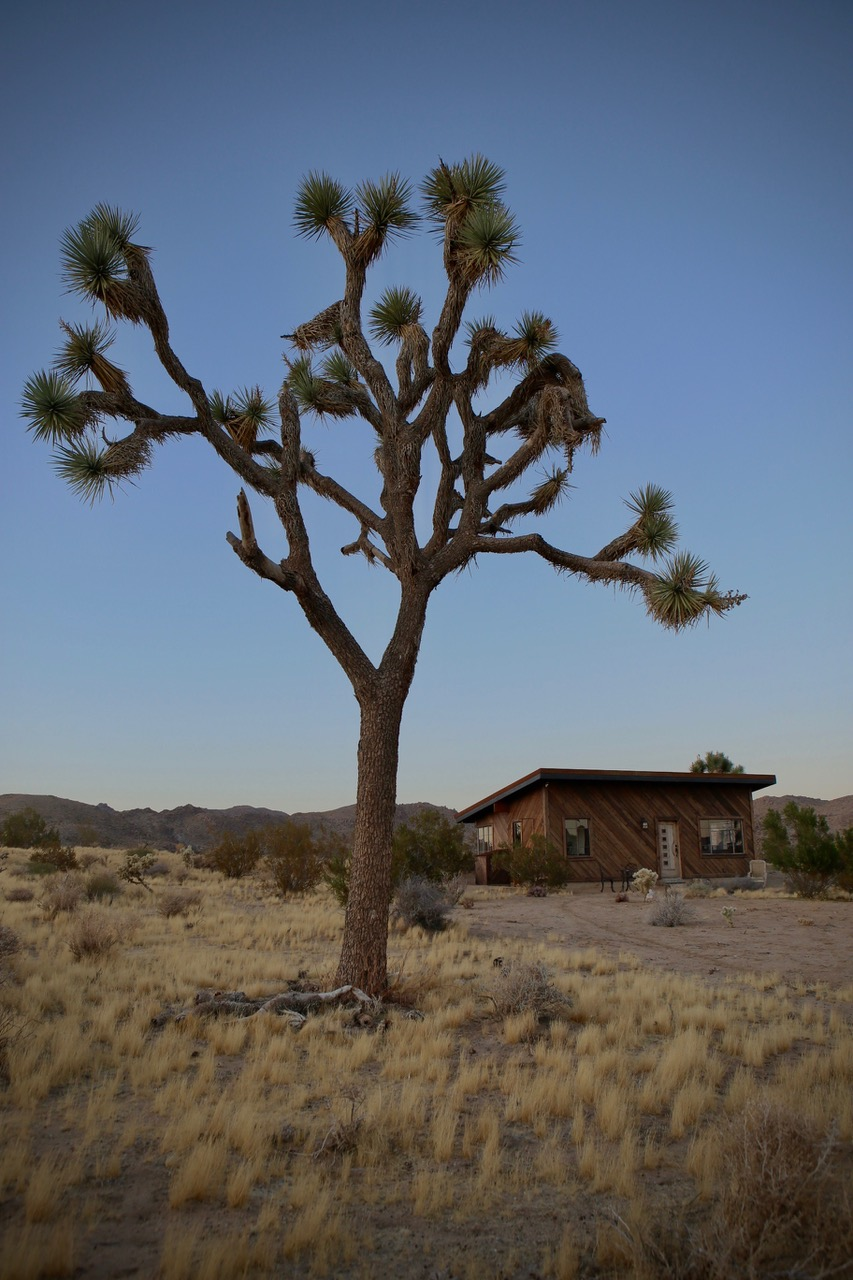 Joshua Tree Cabin