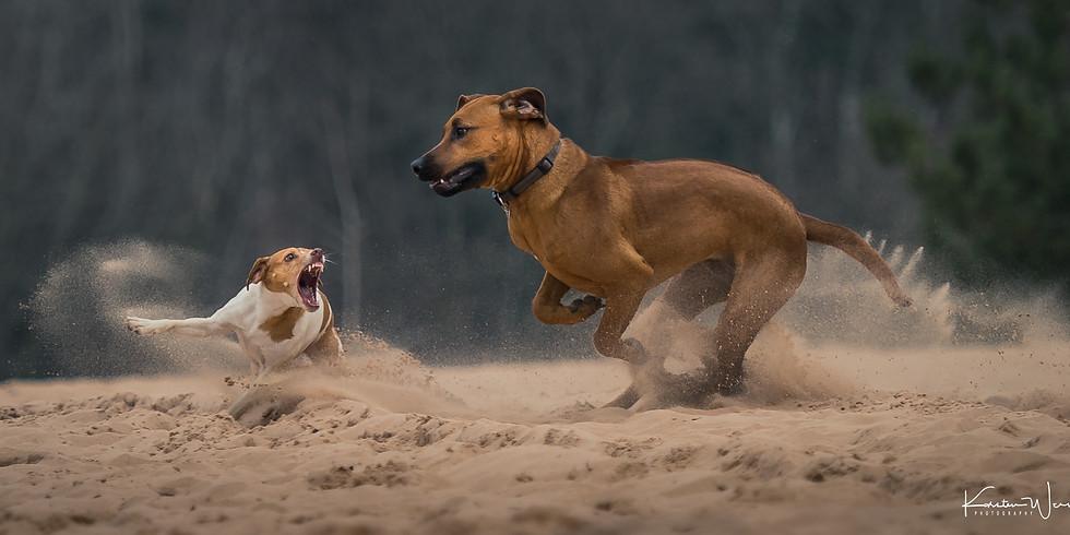 Tierfotografie - Action im Sand