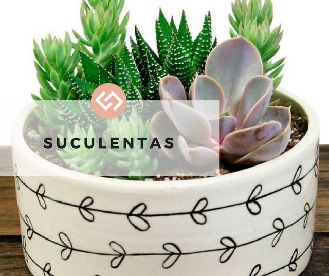 Suculentas