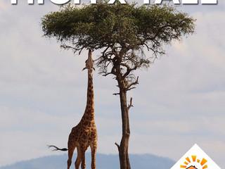 High x Tall