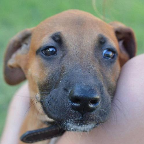 Maya - adopted! March 2016