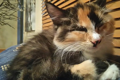Cleopatra - ADOPTED