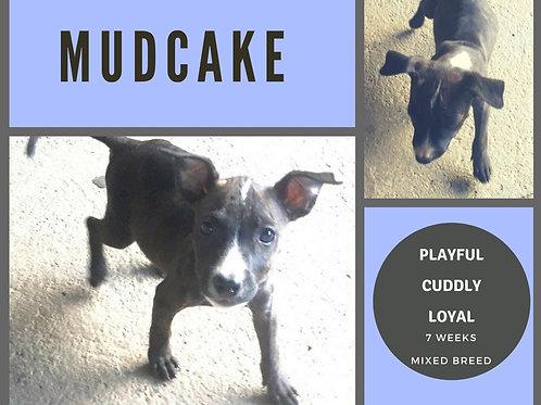 Mudcake