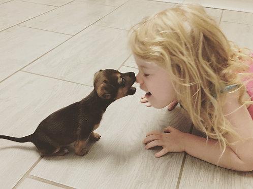 Wayne - adopted December 2015