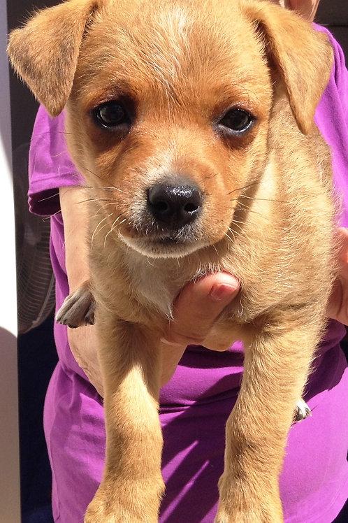 Zippy - Papita's Pup
