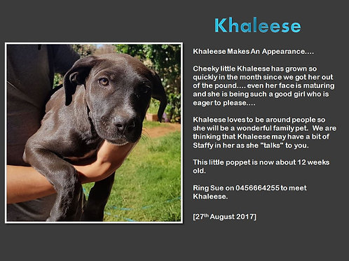 Khaleese
