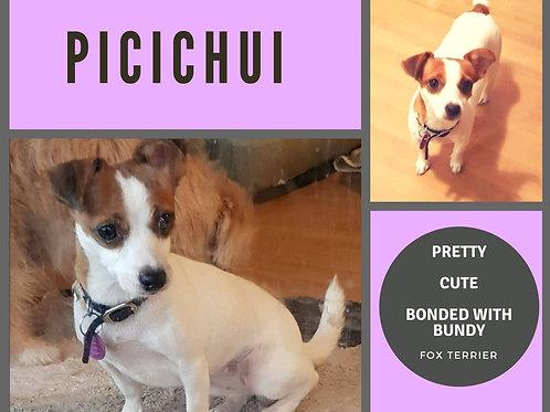 Bundy and Picichu