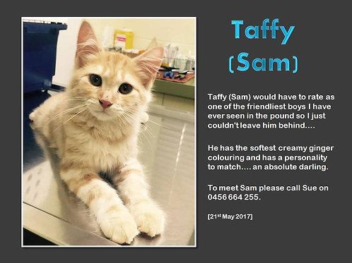 Taffy (Sam)
