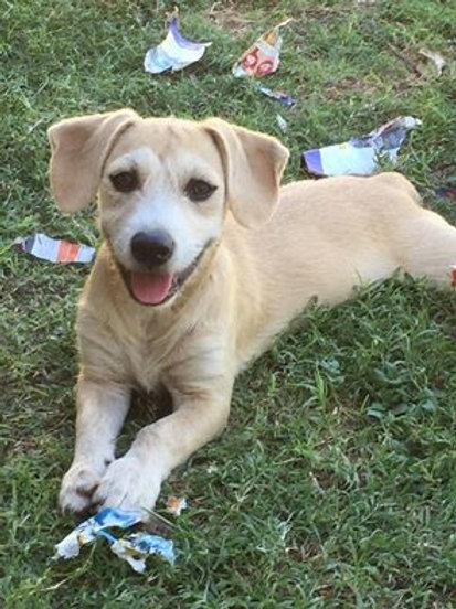 Briella - adopted March 2016