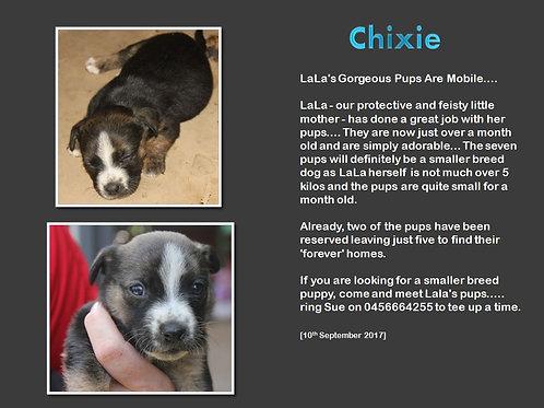 Chixie
