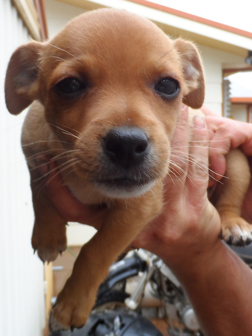 Littlefoot - Papita's Pup