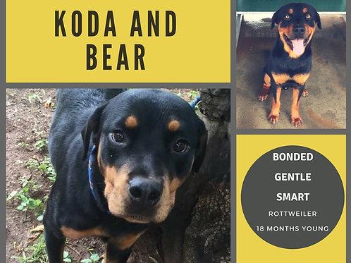 Koda and Bear