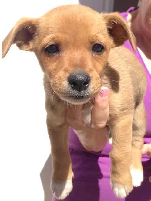 Tootsie - Papita's Pup