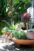 Succulents 84.jpg