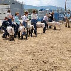 Sheep Show.jpeg