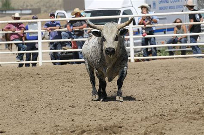 CPRA Bull.jpg