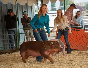 Moyer Swine Show.jpg