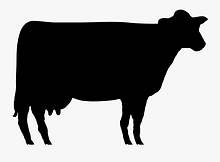 Angus Cow.png