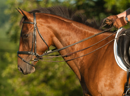 Three Tips to More Effectively Put on a Bridle