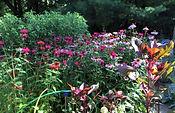 shanno garden 2.jpg