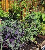 organice garden 3 300.jpg