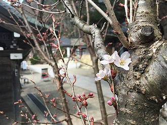 もうすぐです 春