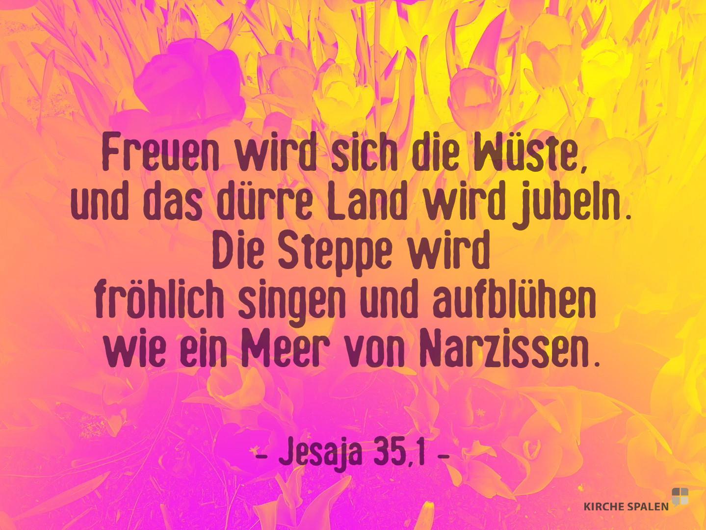 Jesaja 35,1.jpg