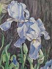 Scarano, #10, Blue Irises, Watercolor, 7