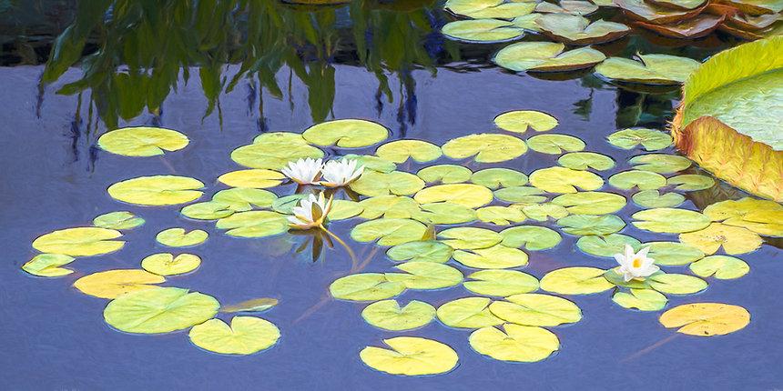 4. Water Lilies 7963.jpg