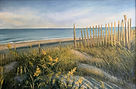 Scarano, #2, Sun Swept Dunes, Oil on can
