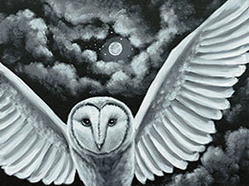 Night Owl Canvas