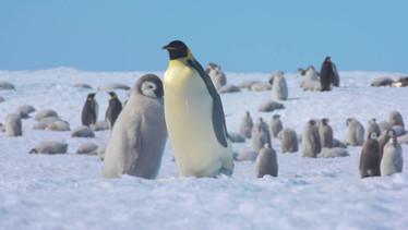 Antarctica In Sight 2020 - Lewis Pugh
