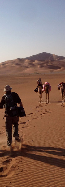 Camels are quicker than you think