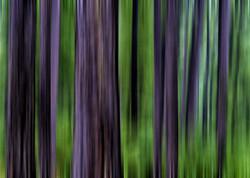 Pine Blur