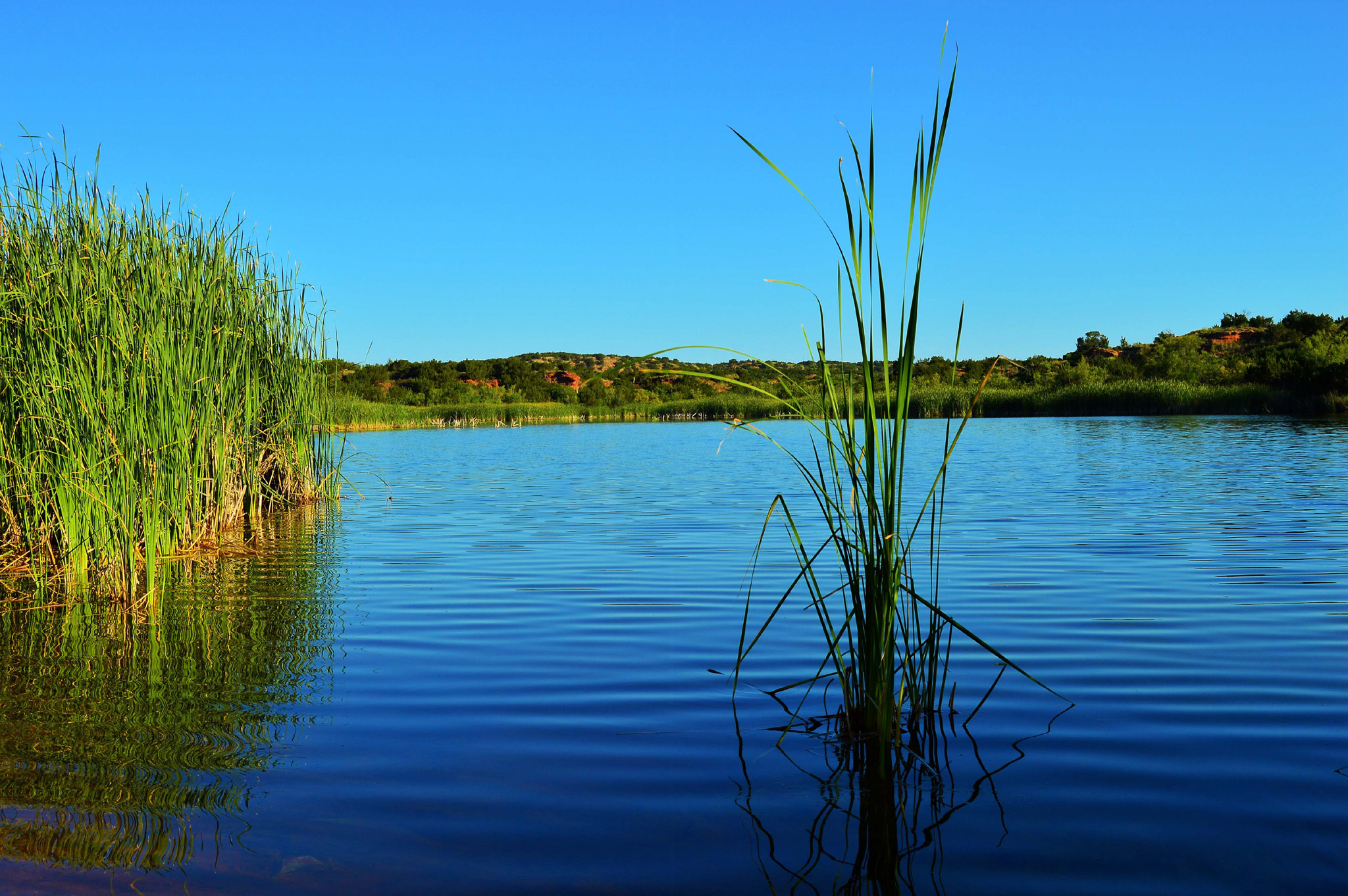 Morning on Big Pond