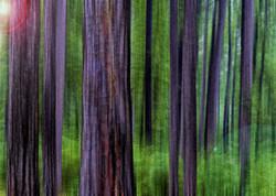 Pine Flare