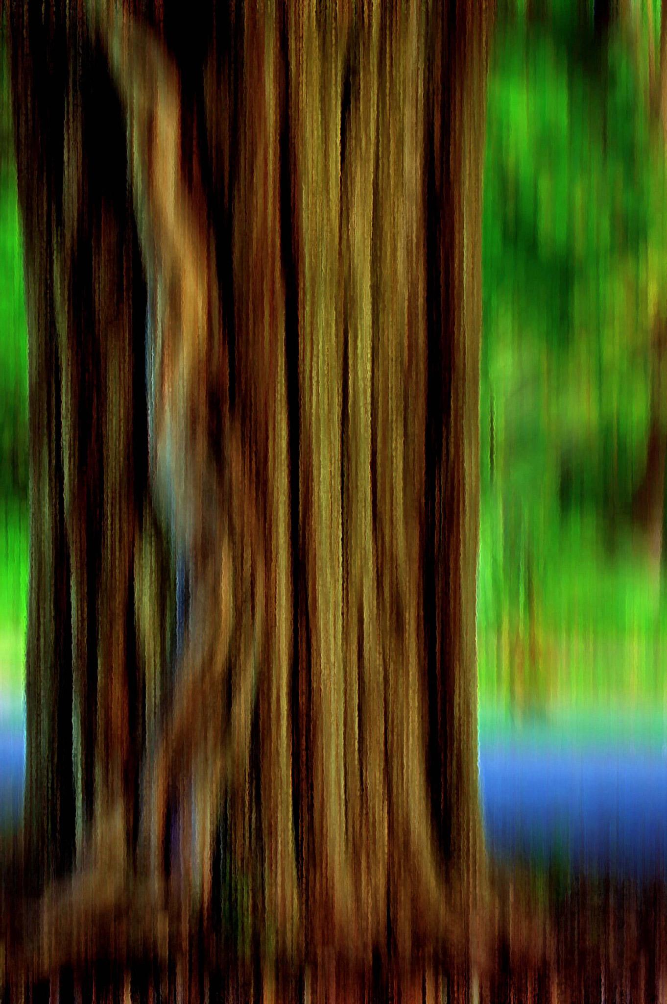 Tree Vining