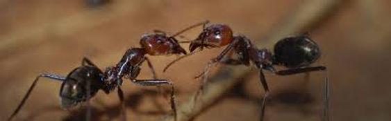ants control dublin